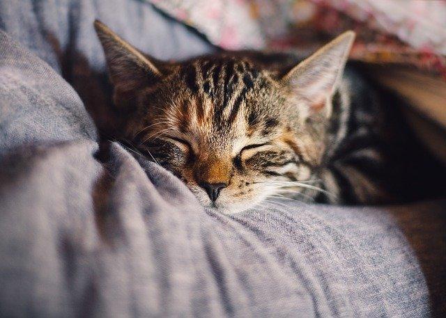 kočka, která odpočívá