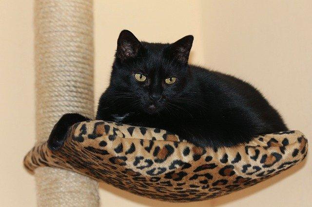 černá kočka na svém místečku