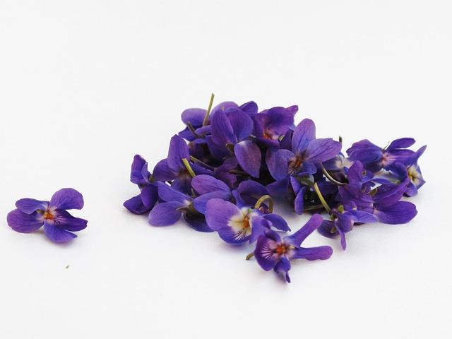 květy fialek